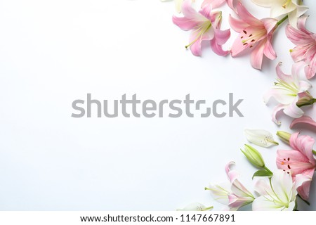 Flat lay composition with beautiful blooming lily flowers on white background #1147667891