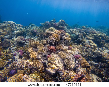 A colorful landscape of fish and coral in Red Sea, Egypt #1147710191