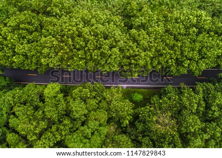 Above aerial view of rural road in deep rain forest with green tree by drone #1147829843