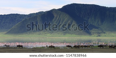 Zebras and wildebeests in the Ngorongoro Crater, Tanzania Royalty-Free Stock Photo #1147838966
