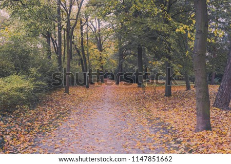 Beautiful autumn leaves trees with fine art look. colorful soft vintage forest park. red yellow green leafs in fall. autumn landscape background. seasonal theme. Autumn fall tone in diffused light.