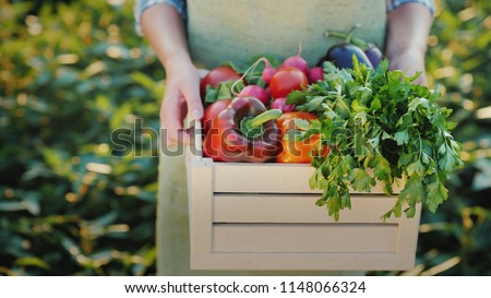 Female hands hold a box with fresh vegetables and herbs. Organic farm products #1148066324