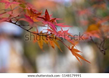kyoto japan autumn #1148179991