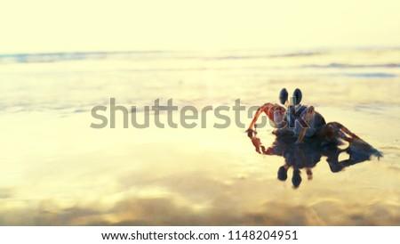 A tiny crab #1148204951