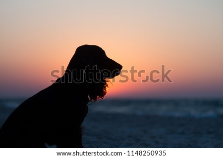 Silhouette of black english cocker spaniel dog. Dog sits and looks at golden sunset (sunrise) near the ocean. Dog sits on the beach near the sea. Backlight. Side face pose. #1148250935