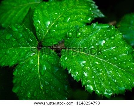 Green leaves with drops of dew. Green background. #1148254793