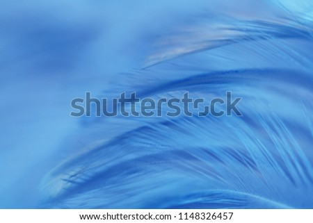 Blur Bird chickens feather texture for background Abstract, soft color of art design. #1148326457