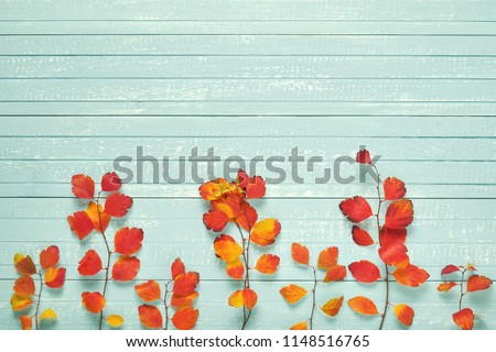 Autumnal frame for your idea and text. Autumn dry twigs of shrubs with leaves of yellow, red, orange, aligned in the middle of the frame on an old wooden board of soft blue. Model of autumn. View from