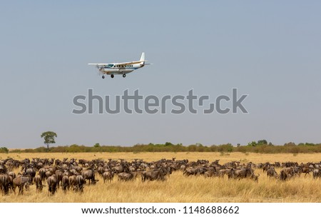 The airplane is flying over the African savanna. There is a huge herd of wildebeest in the savanna under the plane. Photo was taken on short distance and with excellent light. #1148688662