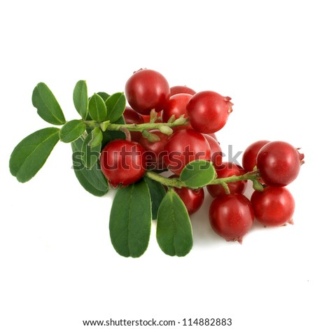 Lingonberries isolated on white background #114882883