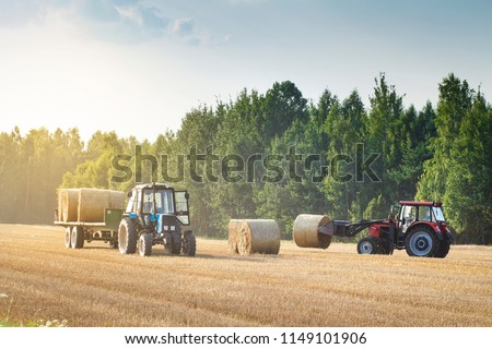 Agricultural machinery on a chamfered golden field moves bales of hay after harvesting grain crops. Tractor loads bales of hay on trailer. Harvest concept #1149101906