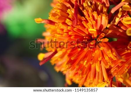 Deep orange flower #1149135857