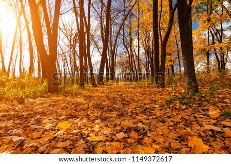 Beautiful autumn park at dawn. Autumn landscape. #1149372617