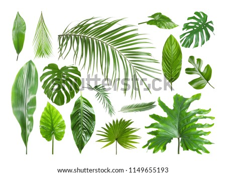 Set of different tropical leaves on white background #1149655193