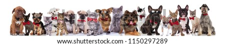 group of happy cats and dogs wearing bowties while standing, sitting and lying on white background #1150297289