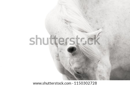 detail of the back of the head and the head of a white horse, horse detail, a black and white photo