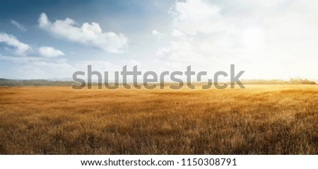 Landscape view of dry savanna with blue sky background #1150308791