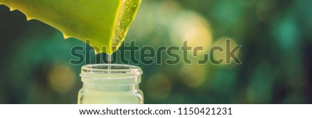 Transparent essence from aloe vera plant drips from leaves, BANNER, long format #1150421231