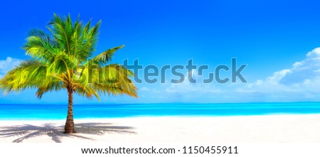 Surreal and wonderful dream beach with palm tree on white sand and turquoise ocean #1150455911