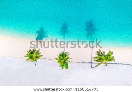 Palm trees on the sandy beach and turquoise ocean from above #1150516793