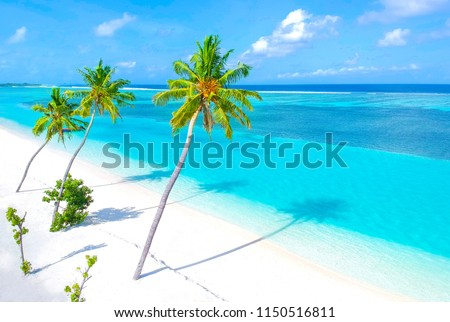 Palm trees on the sandy beach and turquoise ocean from above #1150516811