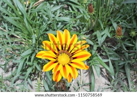 Yellow Brown Flower #1150758569