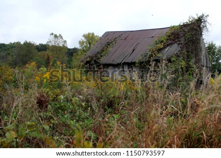 Abandoned barn in an Ohio field surrounded by wildflowers.  #1150793597