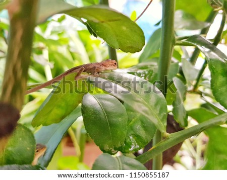 Chameleon on green leaf green #1150855187