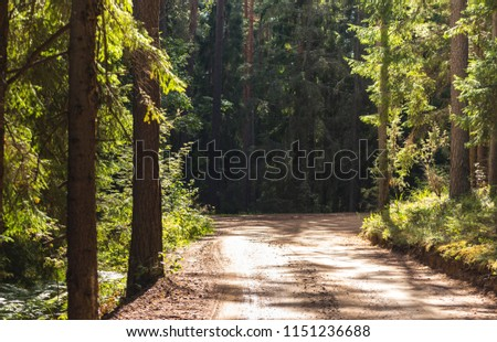 View of the Forest Road, heading deaper in the Woods on the Early Spring Evening, with Tire Marks on it - Moody Photo with Copy Space