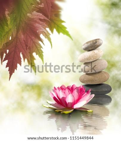 beautiful lotus flower on water closeup #1151449844