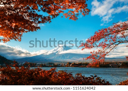 Colorful Autumn in Mount Fuji, Japan - Lake Kawaguchiko is one of the best places in Japan to enjoy Mount Fuji scenery of maple leaves changing color giving image of those leaves framing Mount Fuji. #1151624042