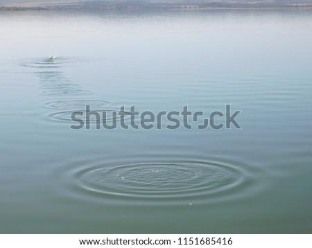 Lake Elementaita, Nakuru County Kenya #1151685416