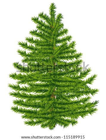 Highly detailed fir tree on white background.