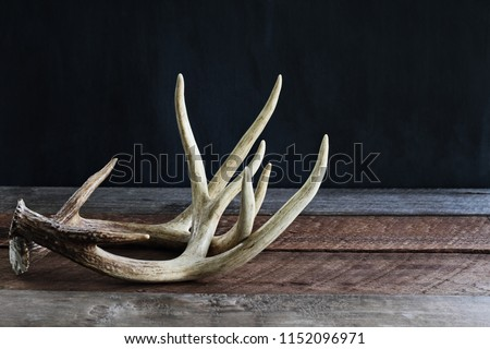 Pair of real white tail deer antlers over a rustic wooden table against a black background used by hunters when hunting to rattle in other large bucks. Free space for text.
