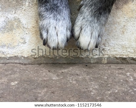 Cute black and white dog legs sitting on cement floor. #1152173546
