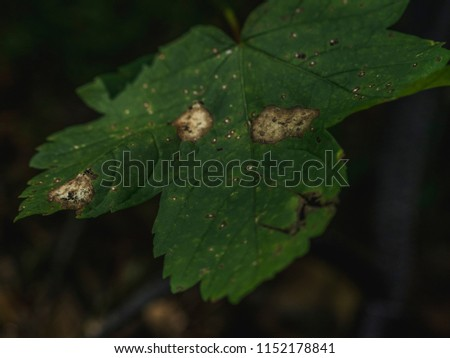 Big green leaf #1152178841
