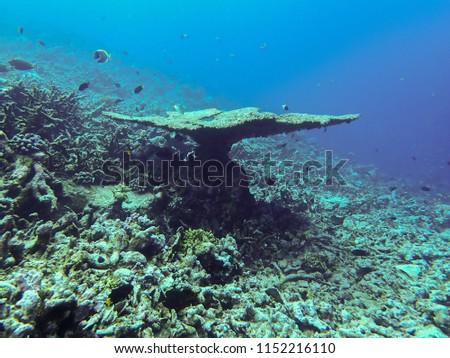 The amazing underwater world #1152216110