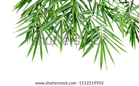Tropical plant green bamboo leaves isolated on white background, nature backdrop, clipping path included #1152219902