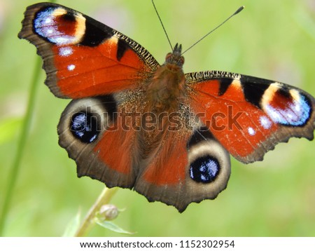 Wild butterfly in nature on meadow flowers close-up #1152302954