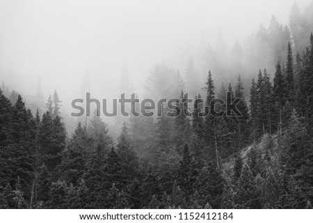 Trees silhouetted in the morning mist and fog on the mountains #1152412184