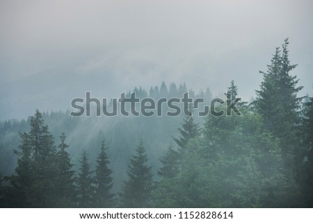 Green mountain forest in cloudy and rainy dark moody weather #1152828614