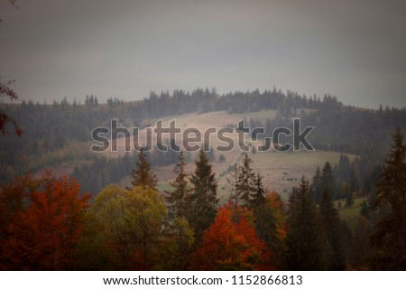 Autumn forest in the mountains #1152866813