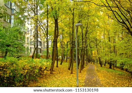 bright yellow foliage in autumn in the Park, Moscow #1153130198