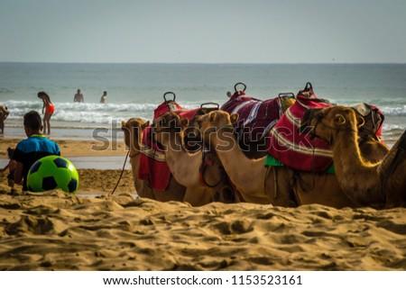 Tangier beach in summer #1153523161