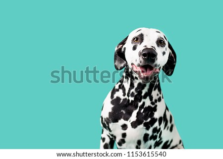 Beautiful Dalmation Dog on Colored Background #1153615540