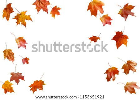 border frame of colorful autumn leaves isolated on white #1153651921