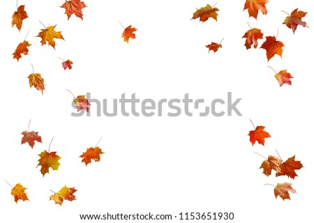 border frame of colorful autumn leaves isolated on white #1153651930