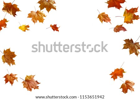 border frame of colorful autumn leaves isolated on white #1153651942