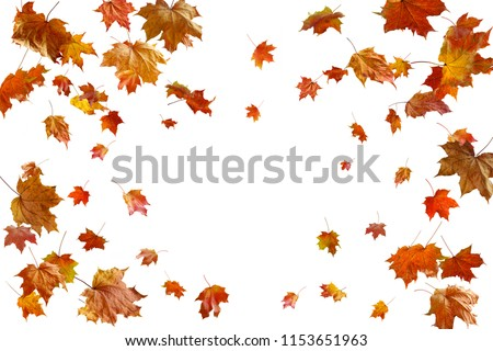border frame of colorful autumn leaves isolated on white #1153651963