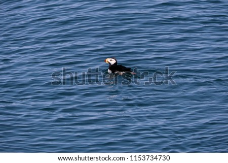 White Horned Puffin #1153734730